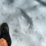 Opazili smo tudi stopinjo medveda.